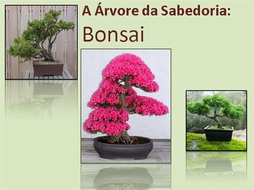 Curso Online de Bonsai e Paisagismo