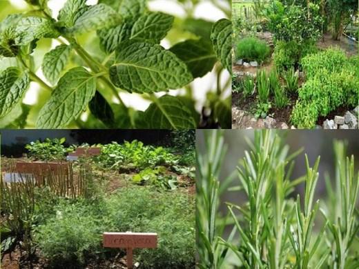 Curso de como fazer uma horta medicinal for Como criar caracoles de jardin