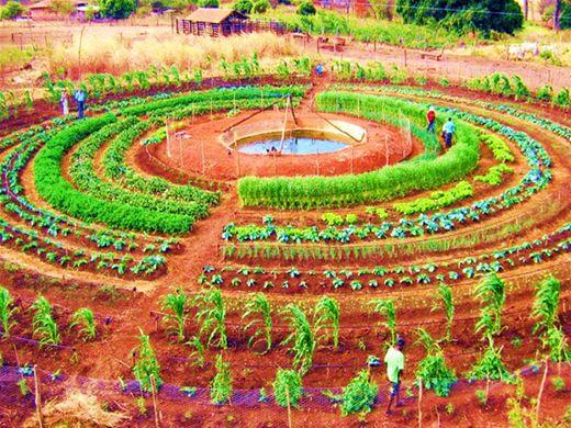 Curso Online de Sistema Mandala de Produção Agrícola