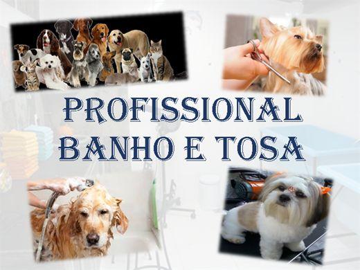 Curso Online de Profissional  Banho e Tosa