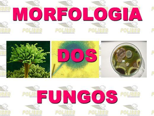Curso Online de MORFOLOGIA DOS FUNGOS FILAMENTOSOS E UNICELULARES