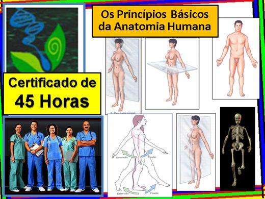 Curso Online de Os Princípios Básicos da Anatomia Humana