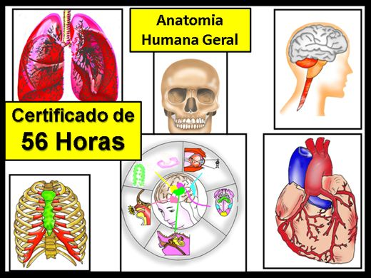 Curso Online de Anatomia Humana Geral