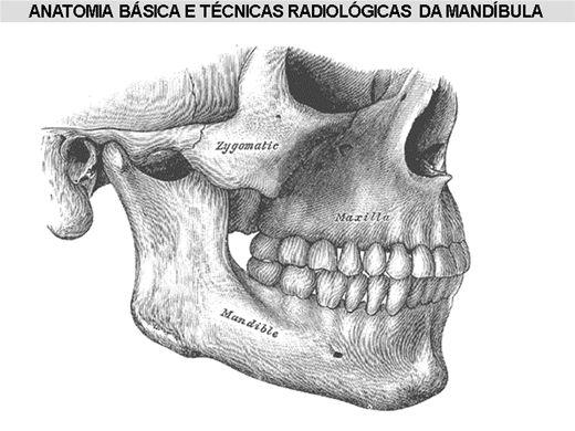 Curso Online de Anatomia Básica e Técnicas Radiológicas da Mandíbula