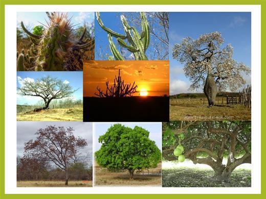 Curso Online de Os Principais Biomas e Ecossistemas da Terra