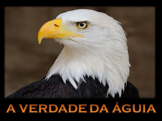 Curso Online de A VERDADE DA ÁGUIA