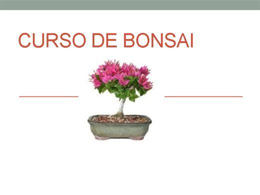 Curso Online de Curso de Bonsai