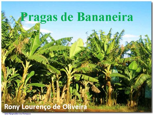 Curso Online de Principais Pragas na Bananeira