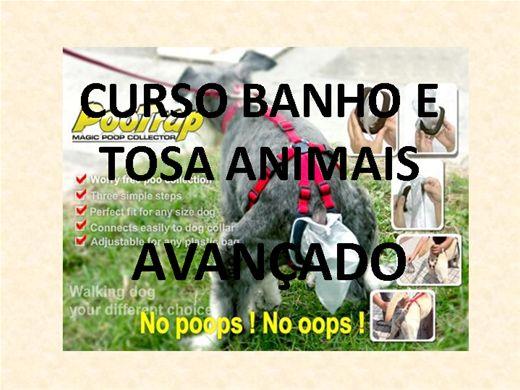 Curso Online de CURSO BANHO E TOSA EM ANIMAIS AVANÇADO
