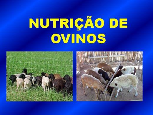 Curso Online de Nutrição de Ovinos