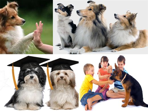 Curso Online de Adestramento Básico de Cães