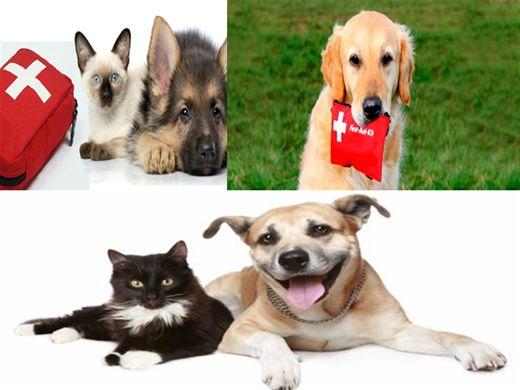 Curso Online de Primeiros Socorros (Cães e Gatos)