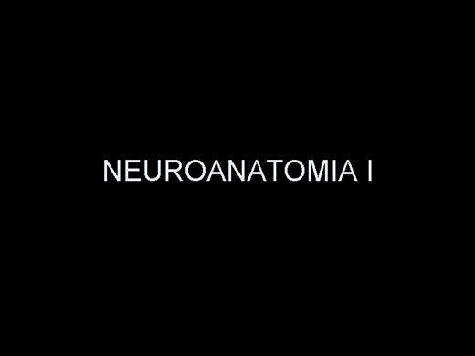 Curso Online de NEUROANATOMIA