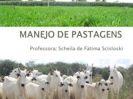 Curso Online de Manejo das Pastagens