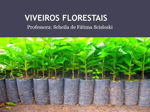 Curso Online de Viveiros Florestais
