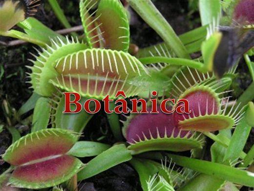 Curso Online de Botânica