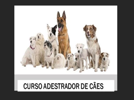 Curso Online de ADESTRADOR BÁSICO DE CÃES