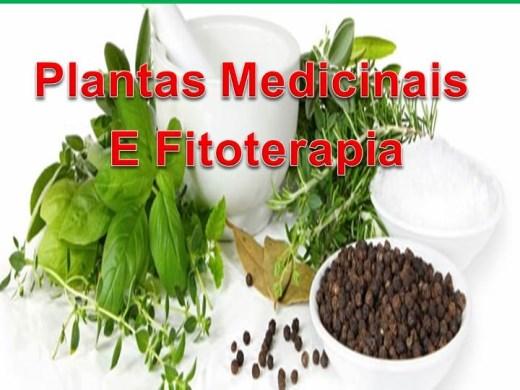 Curso Online de Plantas Medicinais E Fitoterapia
