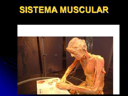 Curso Online de SISTEMA MUSCULAR