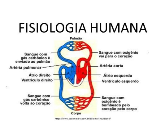 Curso Online de Fisiologia Humana