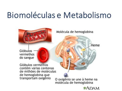 Curso Online de Biomoléculas e Metabolismo