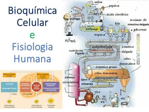 Curso Online de Bioquímica Celular e Fisiologia Humana